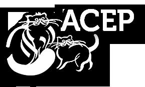 logo Fantasy Studio
